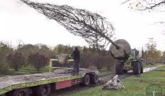 Сезон посадок деревьев крупномеров!